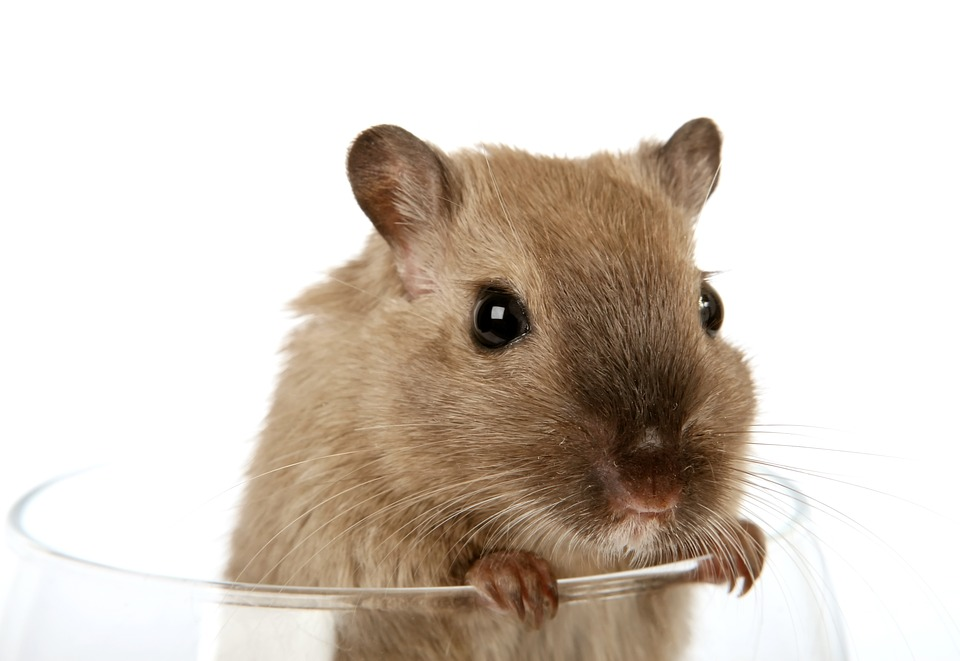 If You Are A Resident Of Winston Salem Or Charlotte NC And Have A Pest Control Problem, There Is A Solution For You