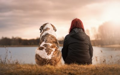 How A Service Dog Positively Impacts A Child With Autism