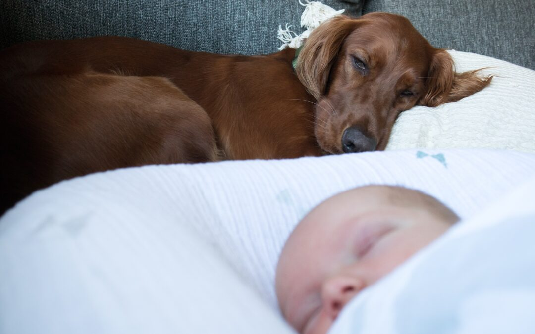 dog and newborn