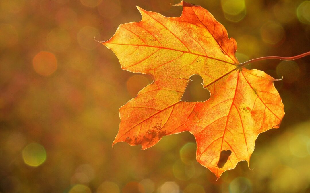 Looking After Your Grass in Autumn – A Wet Weather Guide