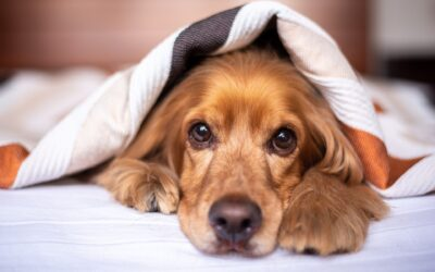 Creating A Pet-Friendly Living Space