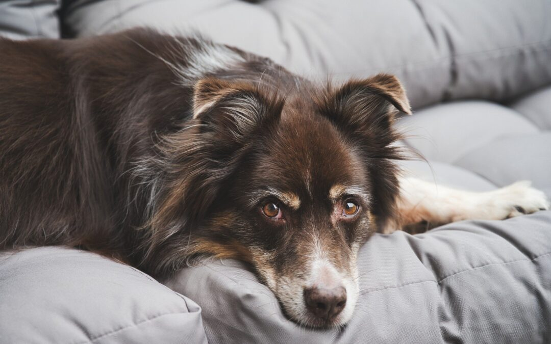 What's Causing That Itch? Common Skin Conditions In Dogs