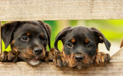 How To Keep Your Pets Safe In The Garden